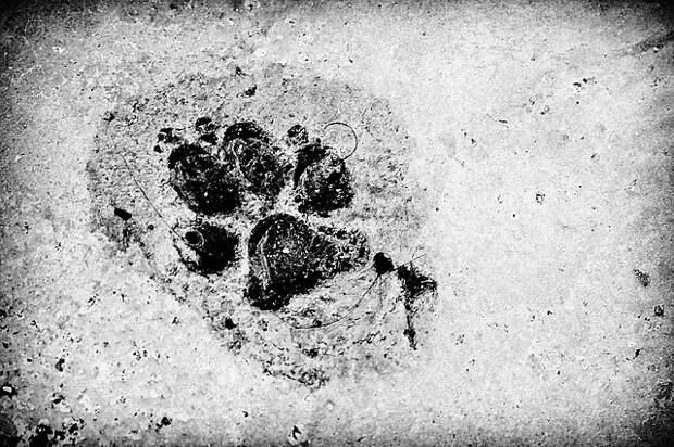 Жильцы дома на Братиславской больше не будут «вляпываться» в цемент