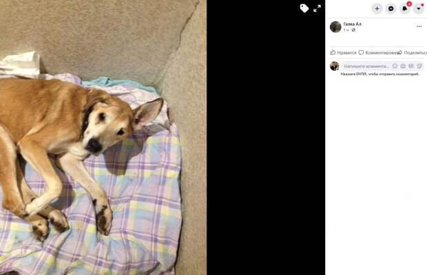 Фото дня: в Лефортове объявлен в розыск пес Малыш