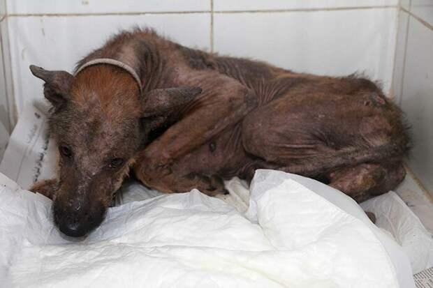 Команда спасла двух собак, одну из которых зовут Хейзел в мире, голод, доброта, животные, люди, собака, спасение