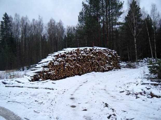 Шестеро жителей Удмуртии вырубили лес на 6 млн рублей