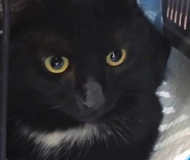 Задумчивая кошка