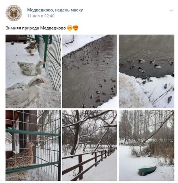 Фото дня: утки облюбовали долину реки Яуза