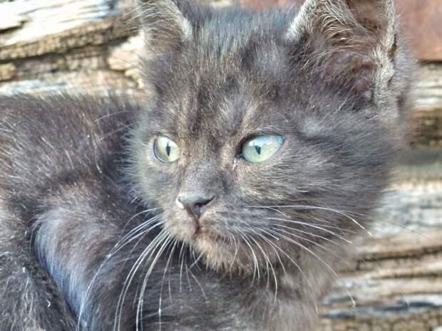 На заброшенной остановке кто-то оставил трёх крохотных котят...