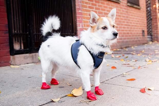 3 полезных совета, которые помогут защитить лапы собаки от реагентов