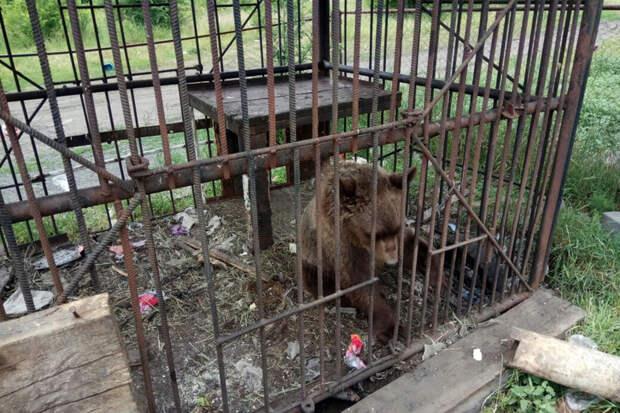 Медвежонок, еноты и олени умирают от голода в заброшенном донском зоопарке