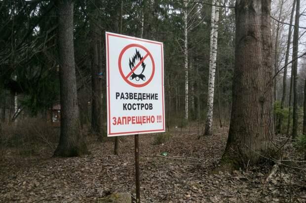 Пожароопасный сезон в лесах Удмуртии закончится в октябре