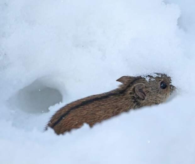 Полевая мышь показалась во всей красе в парке «Покровское-Стрешнево»