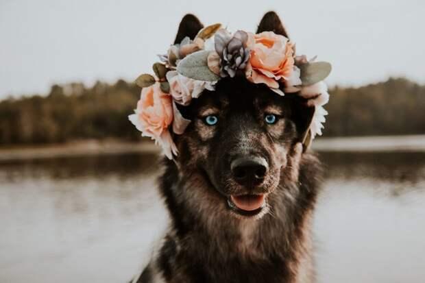 4. Чем сильнее твоя буря, тем ярче твоя радуга жизненная позиция, жизнеутверждающие, канада, собаки, философия жизни, фото собак, фотограф, хаски