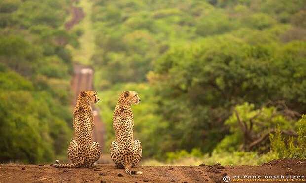 Животные-близнецы - 25 очаровательных фото-03