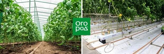 Главный технолог крупной овощной фабрики о том, как выращивать овощи на продажу