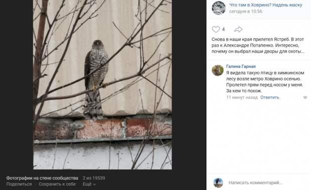 Фото дня: в Ховрине заметили летающего хищника