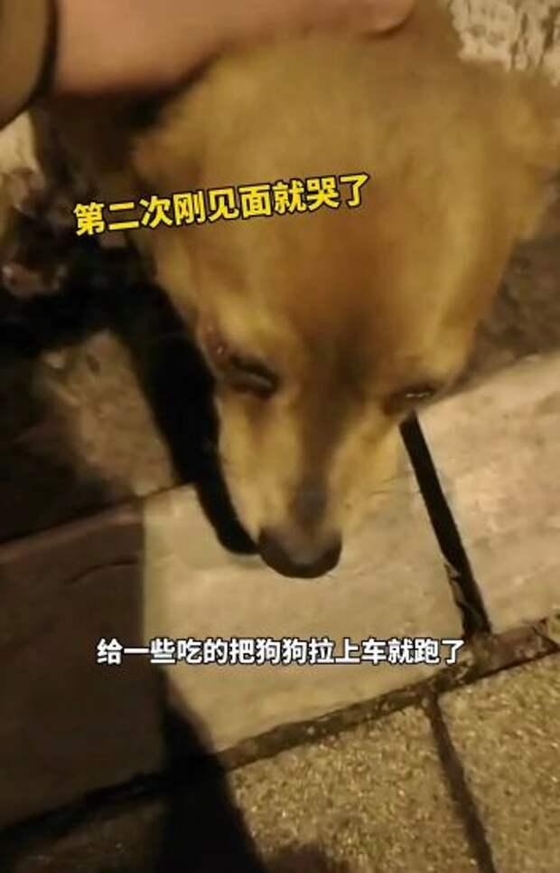 Женщина покормила собаку и не поверила своим глазам — песик заплакал
