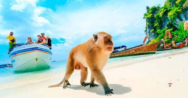 Пляж обезьян | Пхи Пхи