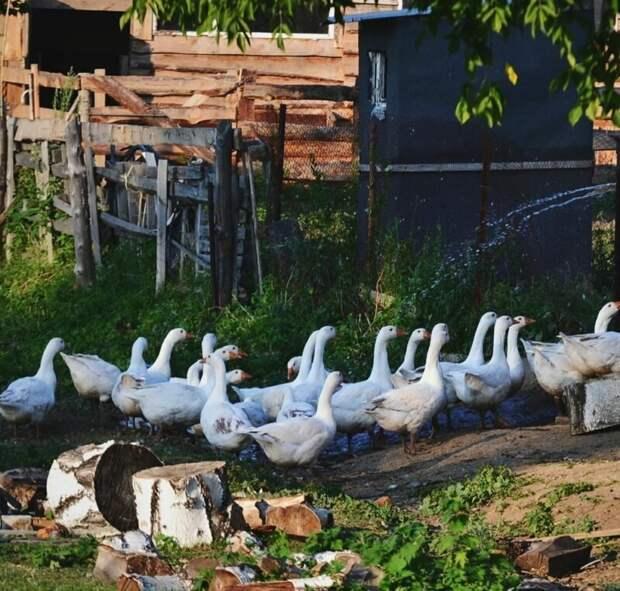 3. Хозяйство в каждом дворе деревня, детство, ностальгия, русская деревня, фото