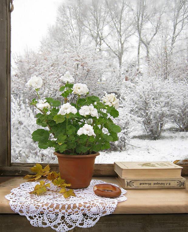 Мне зима в окно стучала. Натюрморты.