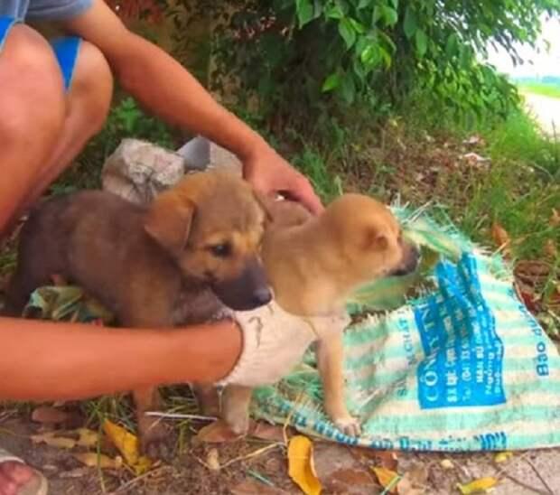 Парень нашел в куче мусора мешок из которого показалась мордашка щенка