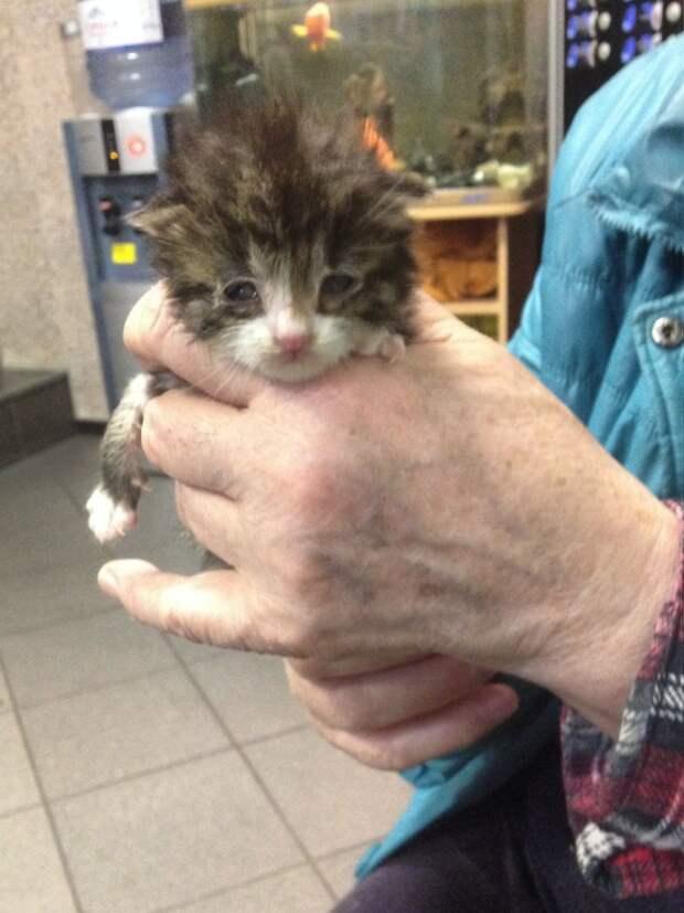 Очень маленький котёнок совсем один. Помогите, пожалуйста!