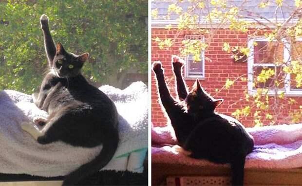14 фото о том, как сильно коты любят тепло