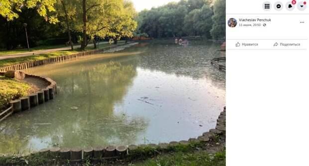 Цветение Леоновского пруда не вредит его обитателям — администрация парка