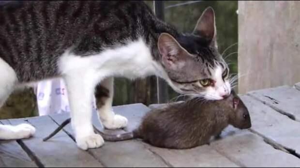 «Из-за санкций россияне переходят на мясо крыс»