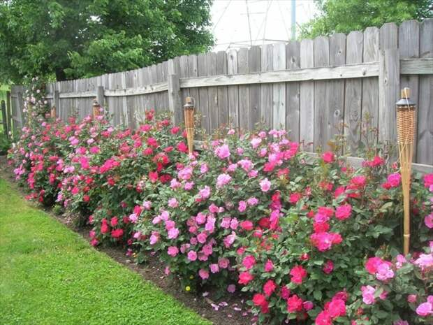 """Как мы """"выжигали"""" воровство цветов на своем участке воровство, жизнь, истории, люди, розы"""