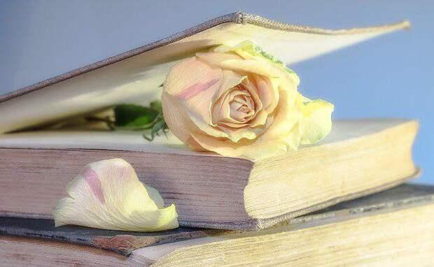 Поэзия. Фото: pixabay.com