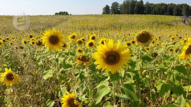 Теплая погода вернется в Удмуртию на пару дней