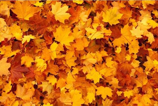 Пакеты с опавшей листвой вывезли со двора на Серебрякова