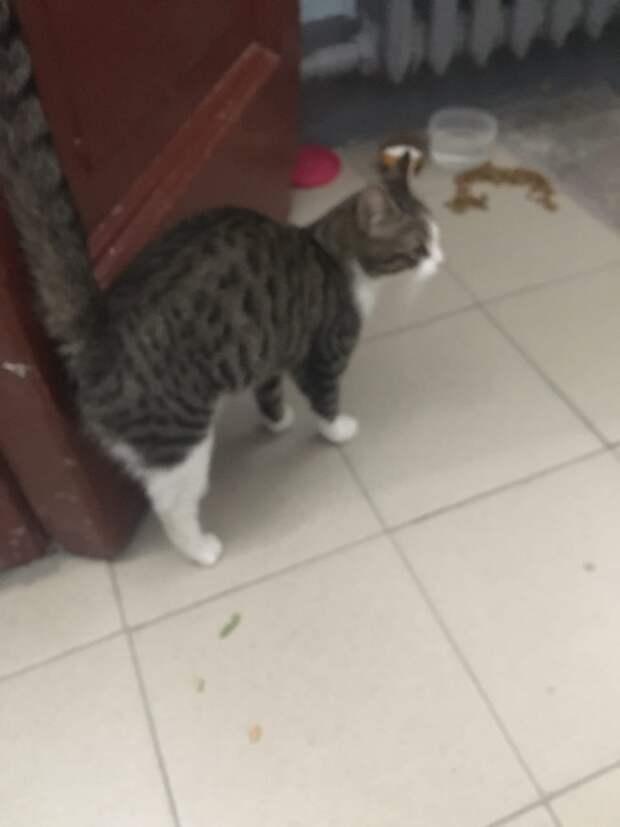 Друзья, давайте не допустим, чтобы случилось страшное, чтобы кошечка пропала на улице!