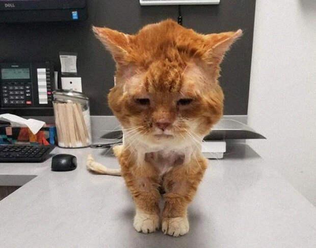 Больной замерзающий котик, постучался в окошко с мольбой спасти его