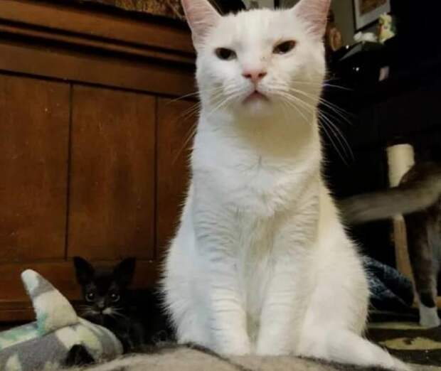 Крошечный котенок размером с ложку долго боролся за жизнь
