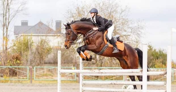 Новый законопроект предлагает разрешить образы лошадей и наездников в рекламе азартных игр