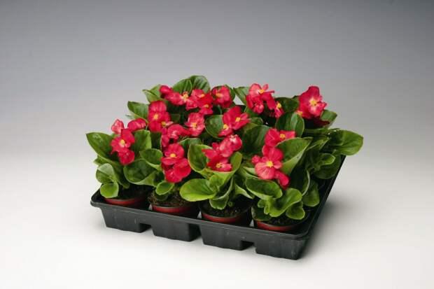 Декабрь: посевы цветов и закладка семян на стратификацию