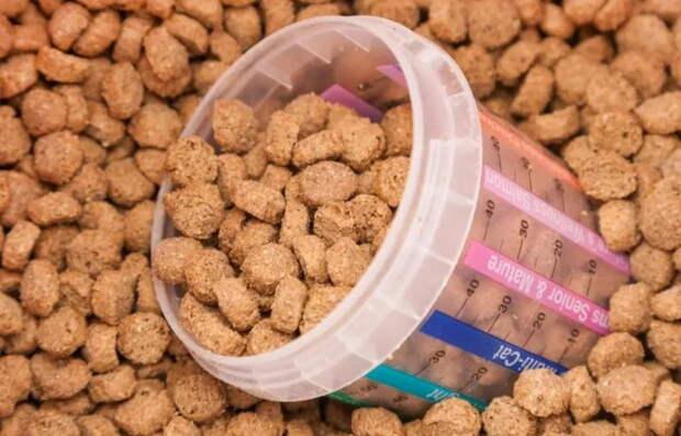 Россия запретила ввоз чешских кормов для животных. Началось