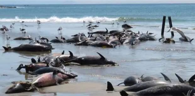 86 дельфинов найдены мертвыми на пляже в Намибии