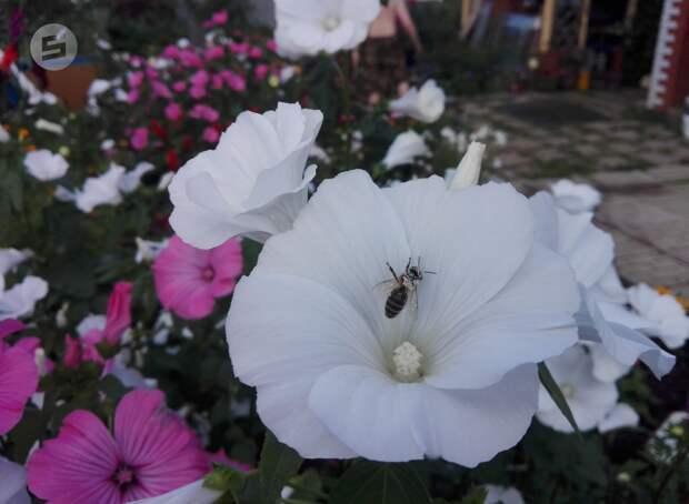 В Удмуртии наказали компанию, по вине которой летом погибли пчелы