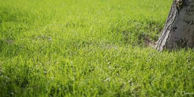 Ремонт газона на Ленинградке завершат к концу лета