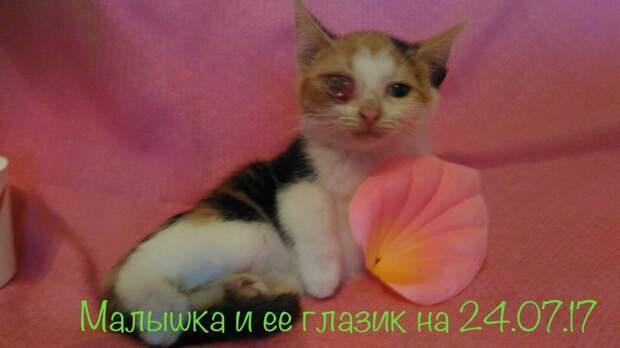 История спасения 15 котят из заброшенного дома
