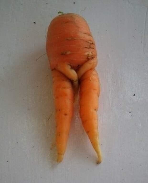 Стеснительная морковка. Фото взято с сайта  vk.com,  Автор Аватария๛