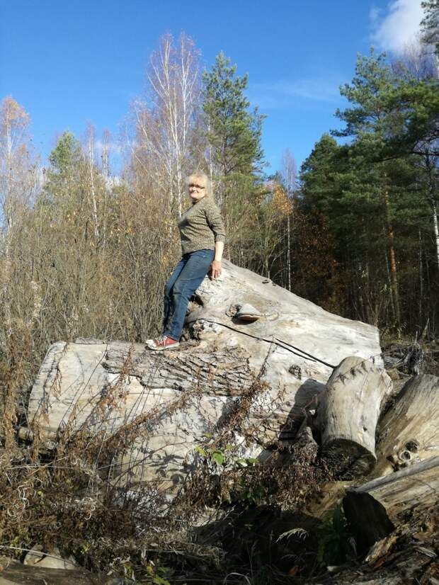 Последний поход в лес.