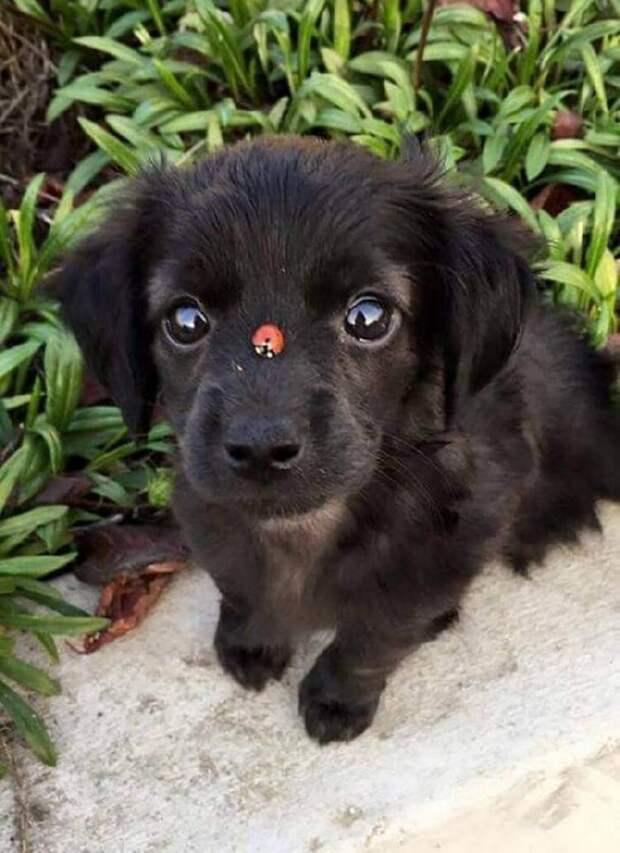 Забавные щенки, в которых невозможно не влюбиться