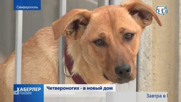В Симферополе достраивают приют для бездомных животных