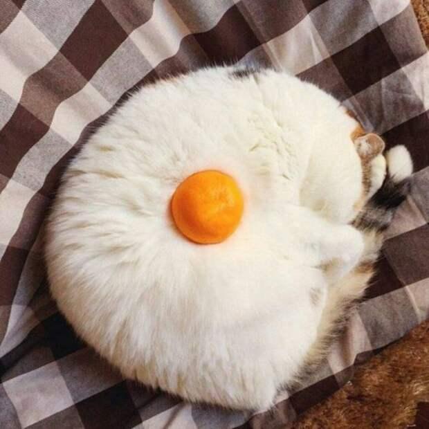 Кот-яичница