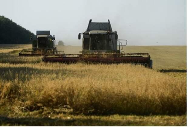 РФ не смогла справиться с рекордным урожаем зерна
