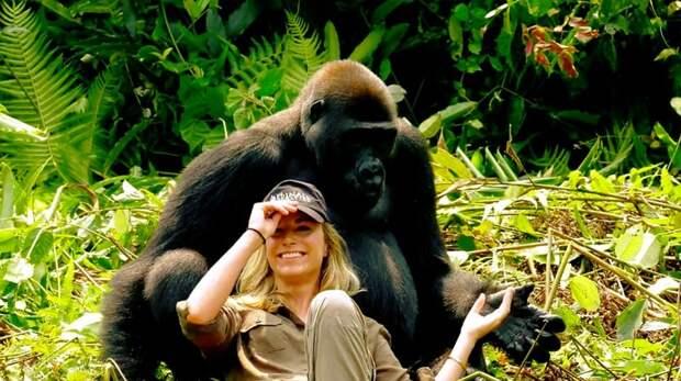 Миллионер-эколог познакомил жену со своей обезьяньей семьей выращенные в неволе, гориллы, животные, знакомство с гориллой, зоозащитники, миллионер, обезьяны, странная дружба