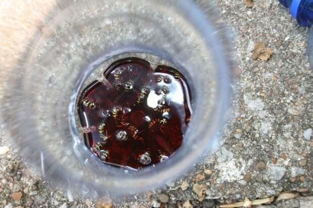 Как сделать эффективную ловушку для ос из пластиковой бутылки