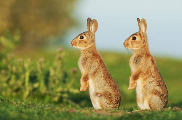 Животные-близнецы - 25 очаровательных фото-24