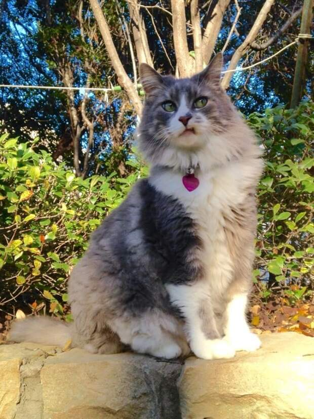 12 необычных причин, почему стоит завести себе котенка