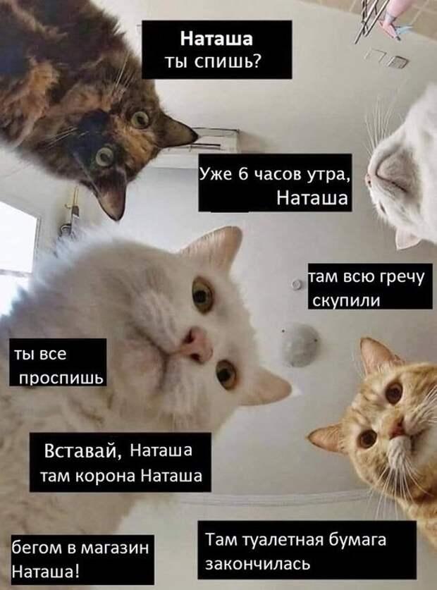 мемы наташа