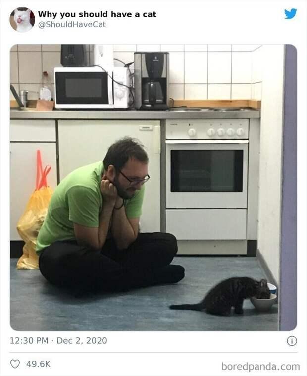 Как котики проникают в наши сердца